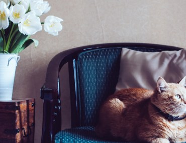 Cat sitting in an armchair next to vase of tulips pets