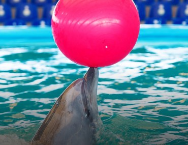 Dolphin Show in Lahore