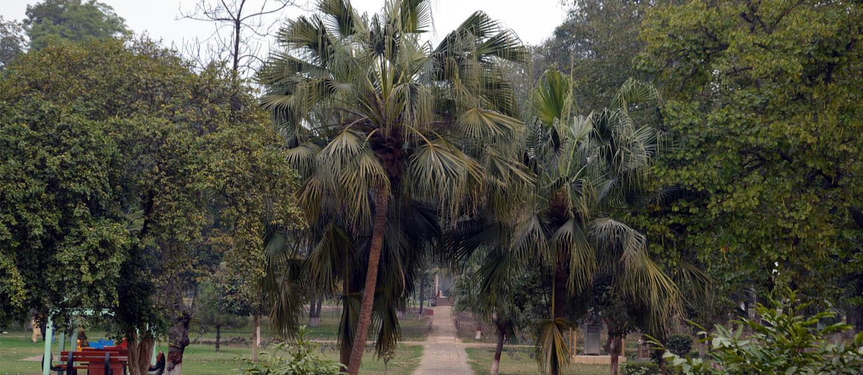 the changa magnga forest