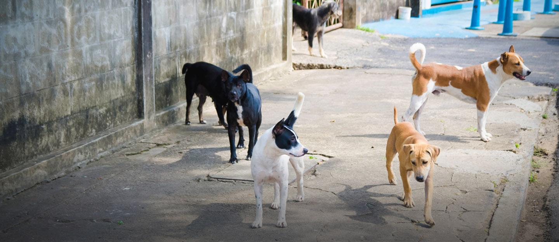 rabies-free pakistan initiative