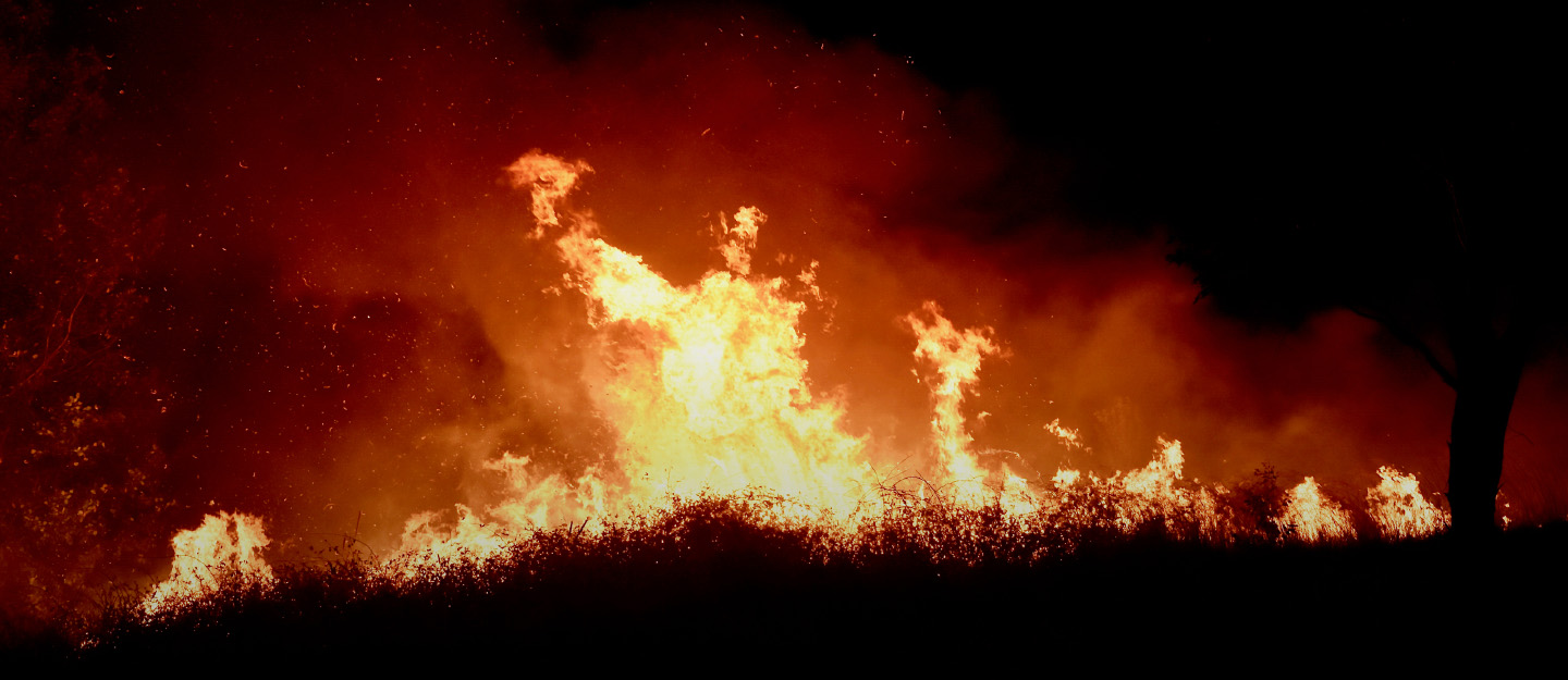 Major causes of bushfires and its global impact