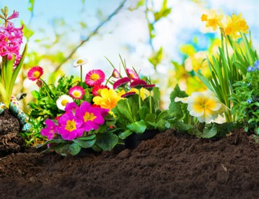 Plants to Grow in Spring