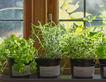 Window-sill herb garden