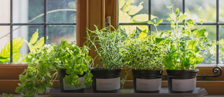 Window-sill herb garden