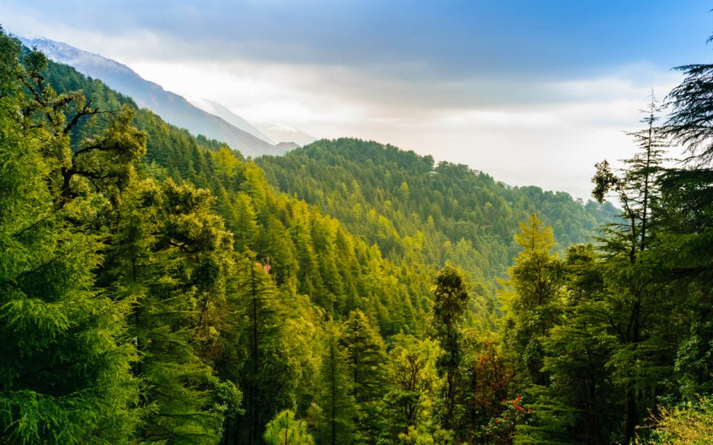 Alpine Forests are found in Gilgit and Swat