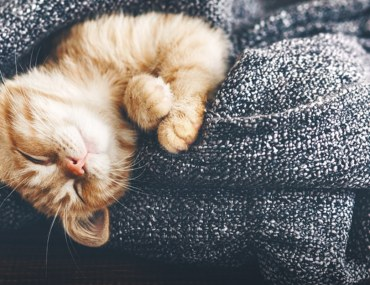 How to Care for Pets During the Coronavirus Outbreak