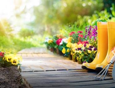 Amazing Budget Garden Ideas