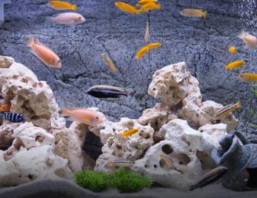 maintain a fish aquarium at home