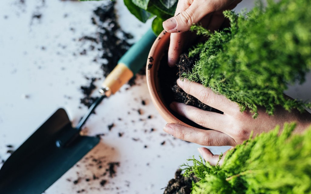 Use High-Quality Potting Soil