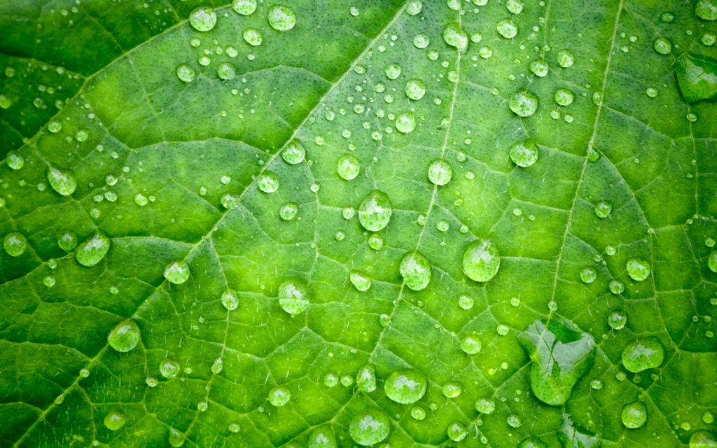 Humid Conditions are Ideal for Indoor Plants