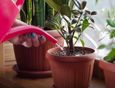 Tips for Growing Healthy Houseplants
