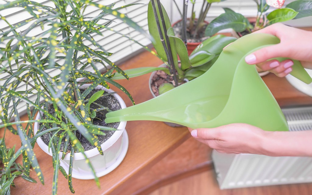 water plants carefully