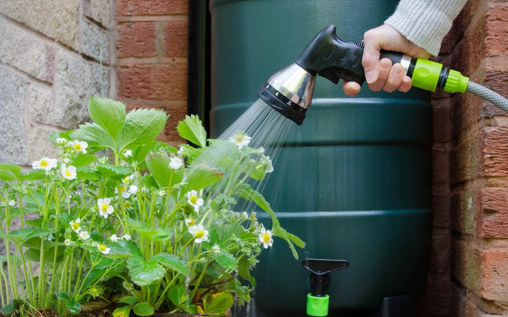 Use rain water for plants