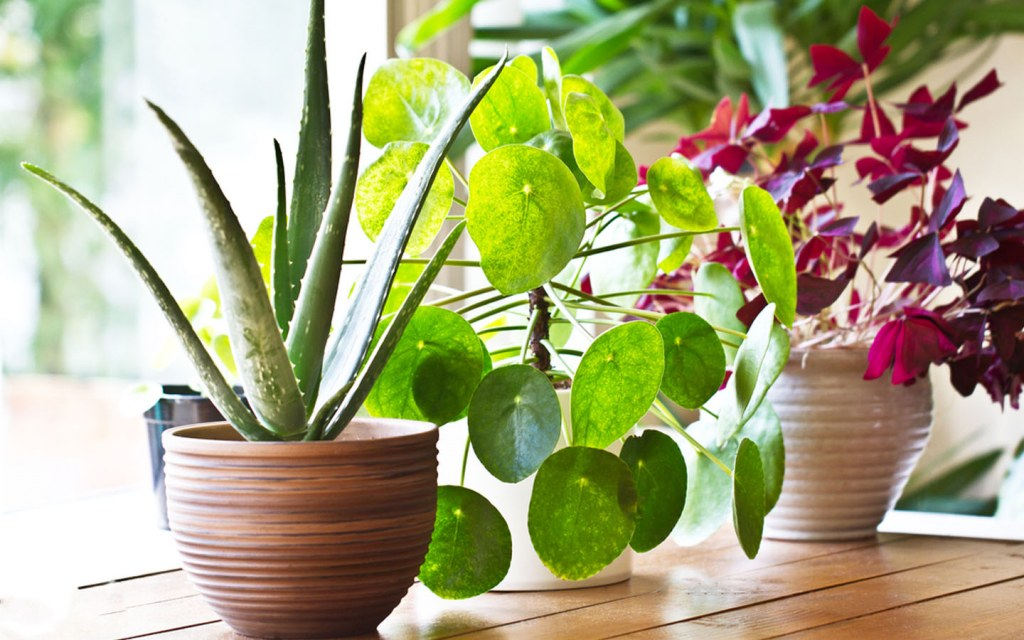 Improve indoor air quality with plants