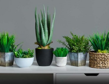 Decorate Your Home with Green Plants