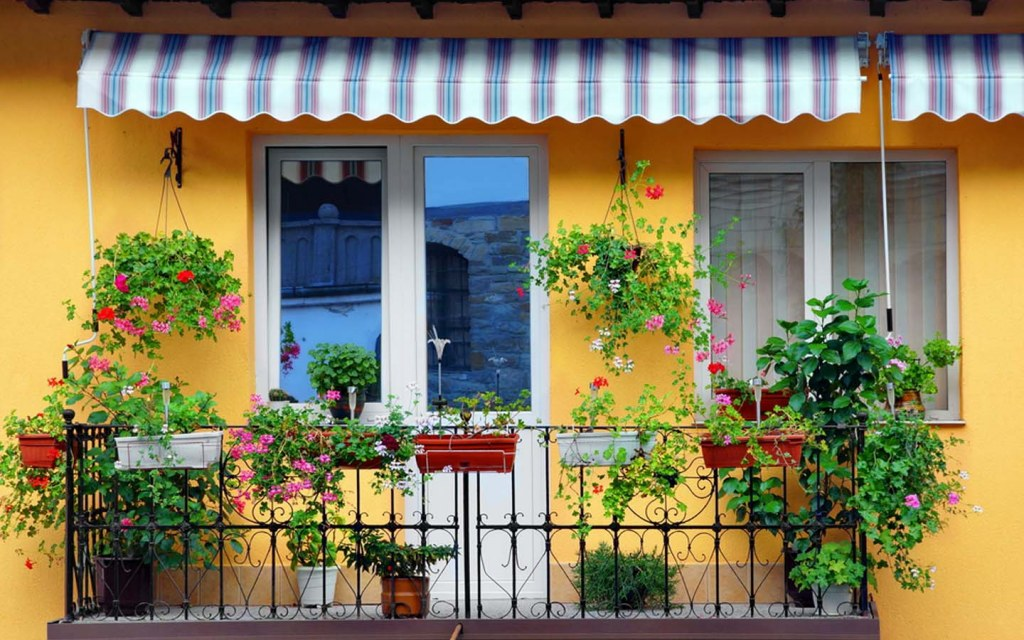 Outdoor plants for privacy
