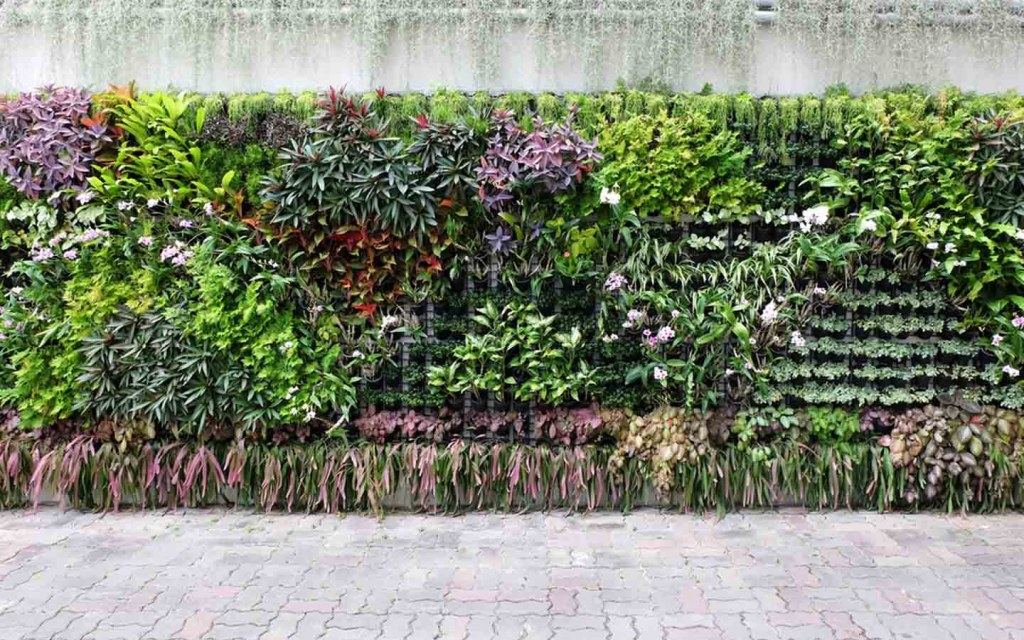 Create a vertical garden on your boundary wall