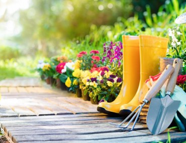 Essential Home Gardening Tools