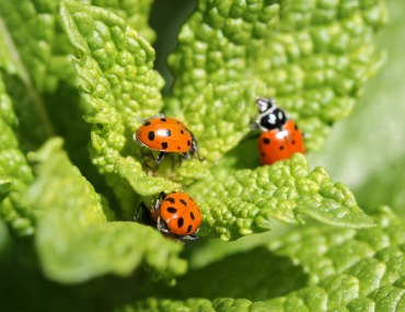 Pest control in your garden