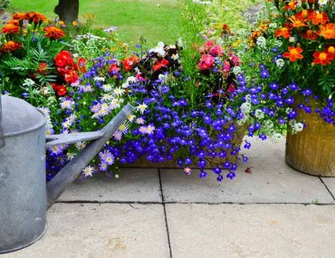 Plants That Add Color to Your Garden