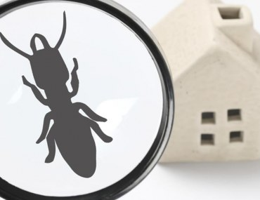 top signs of termite infestations