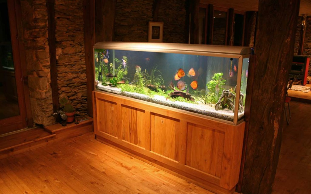 how to choose the right aquarium size