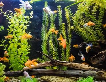 how to choose an aquarium