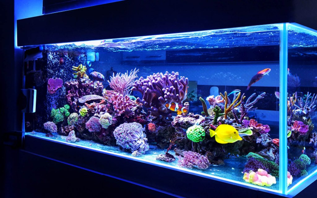 best aquarium size for home