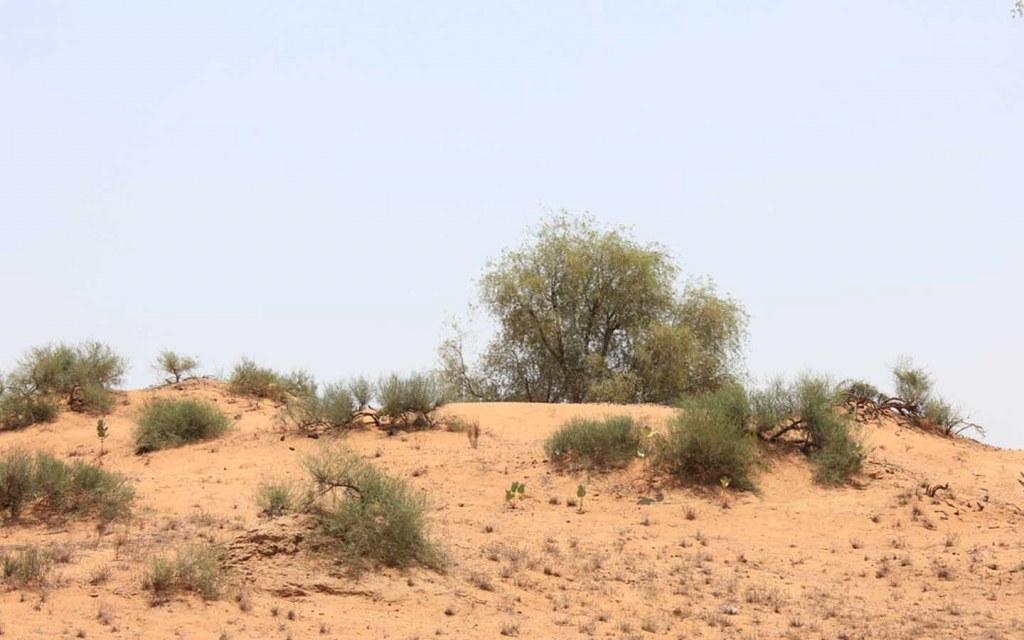 Desert at Deh Akro Wildlife Sanctuary
