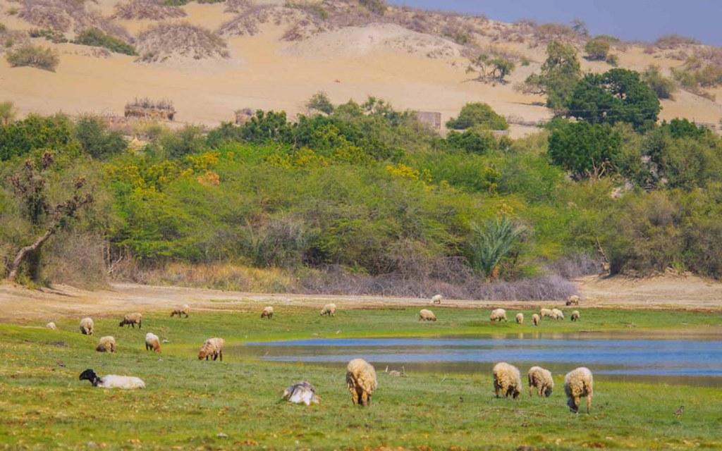 Rangelands in Sindh