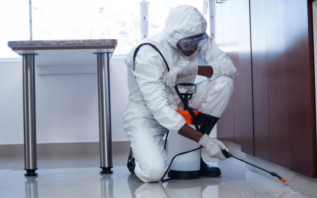 pest control is a hidden cost when renovating a house