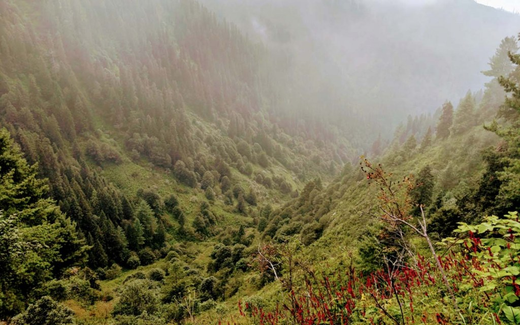 Trek to Miranjani Top from Nathia Gali