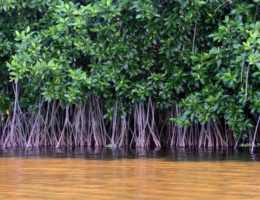 mangrove forests in Pakistan