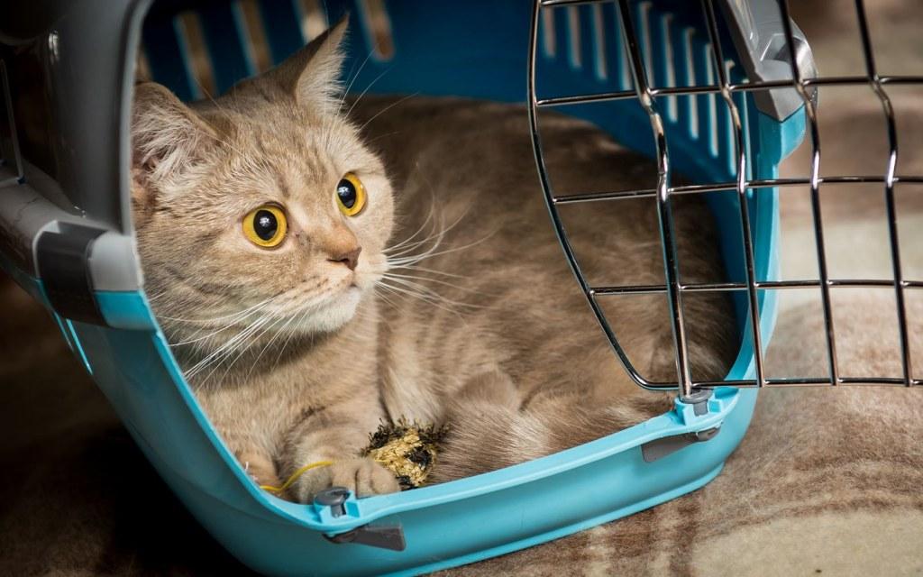 Acquaint your cat with the carrier before travelling