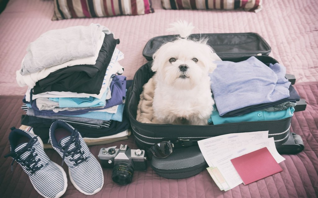 Travelling with your pets can be tricky