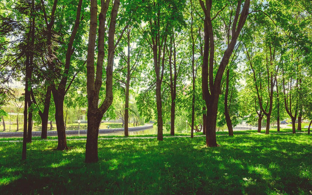 benefits of urban forestry