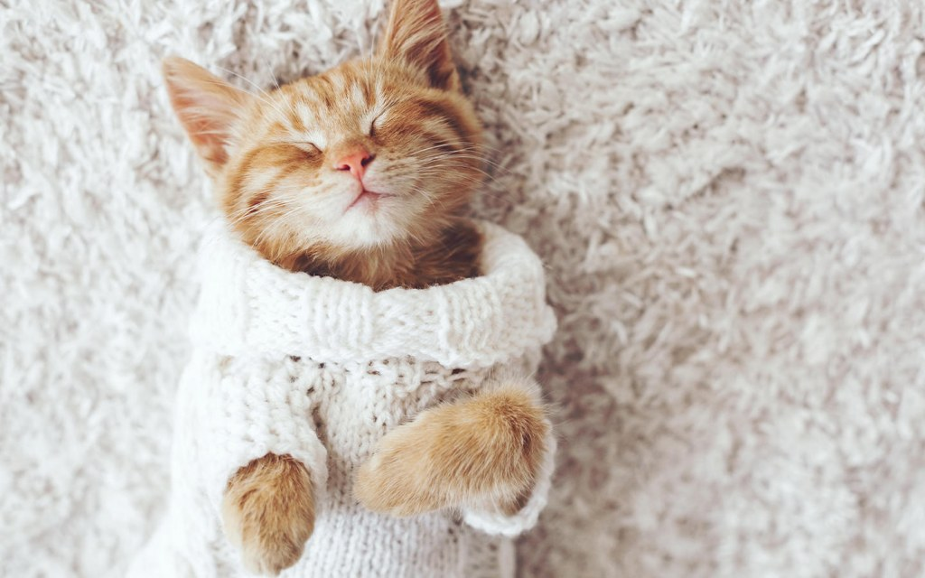 use winter clothing for pets