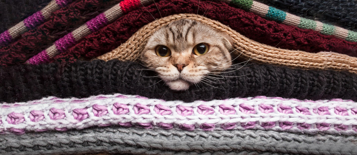 tips to keep your pets warm in winter