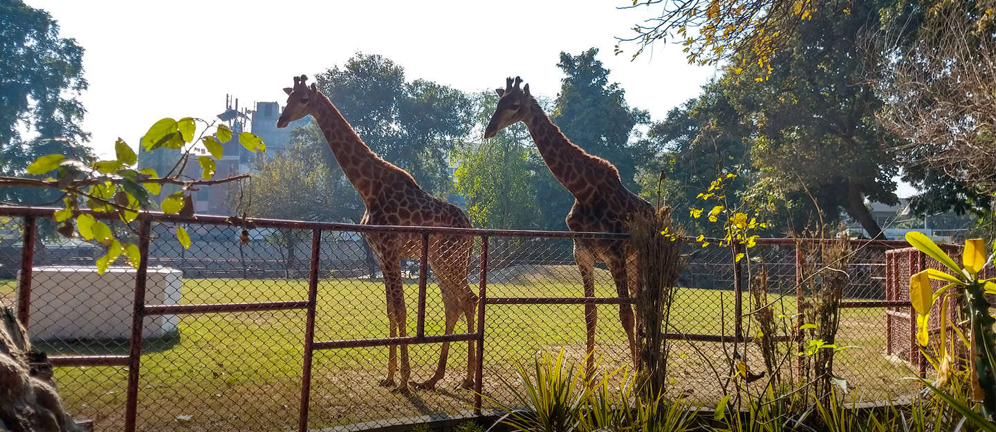 visit lahore zoo with your families