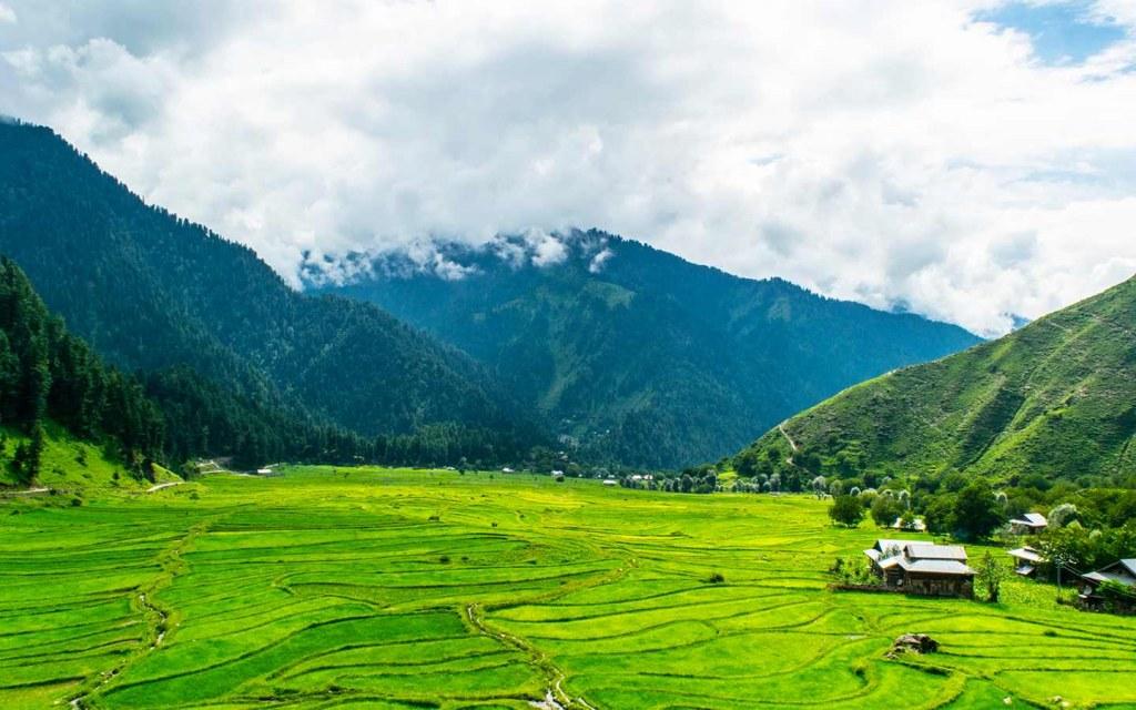 Pakistan to plant 10 billion trees this year