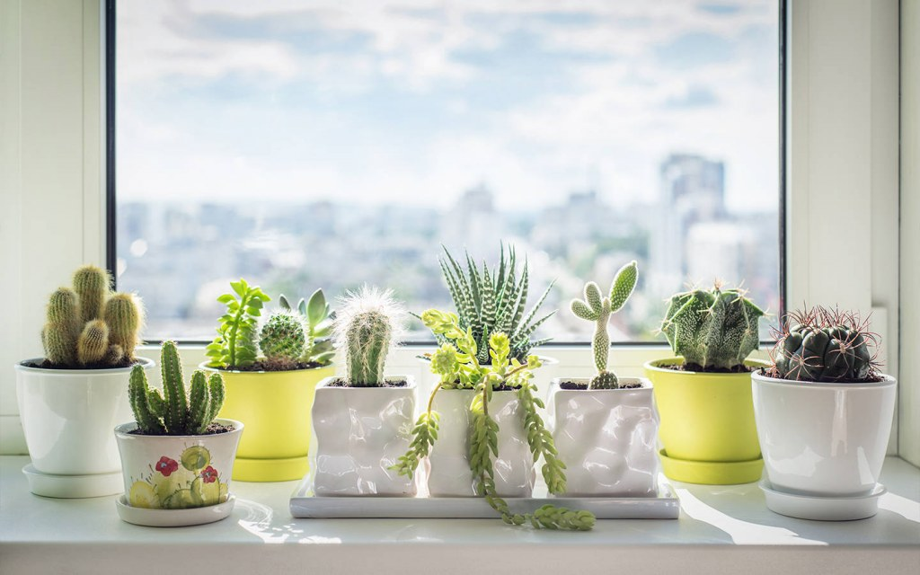 how to decorate a window sill with plants