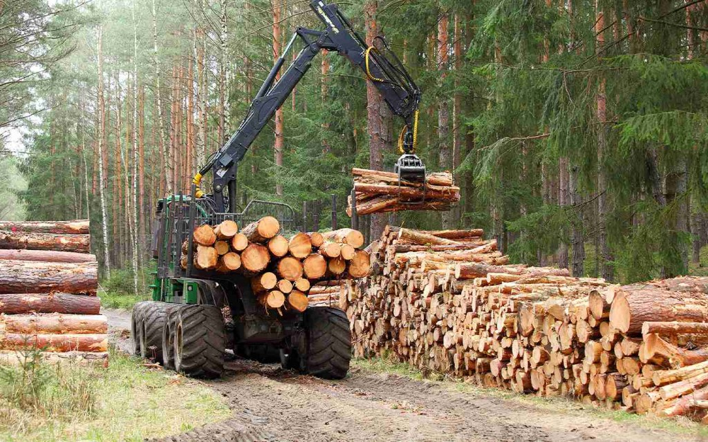 More About Sustainable Timber and Its Environmental Benefits