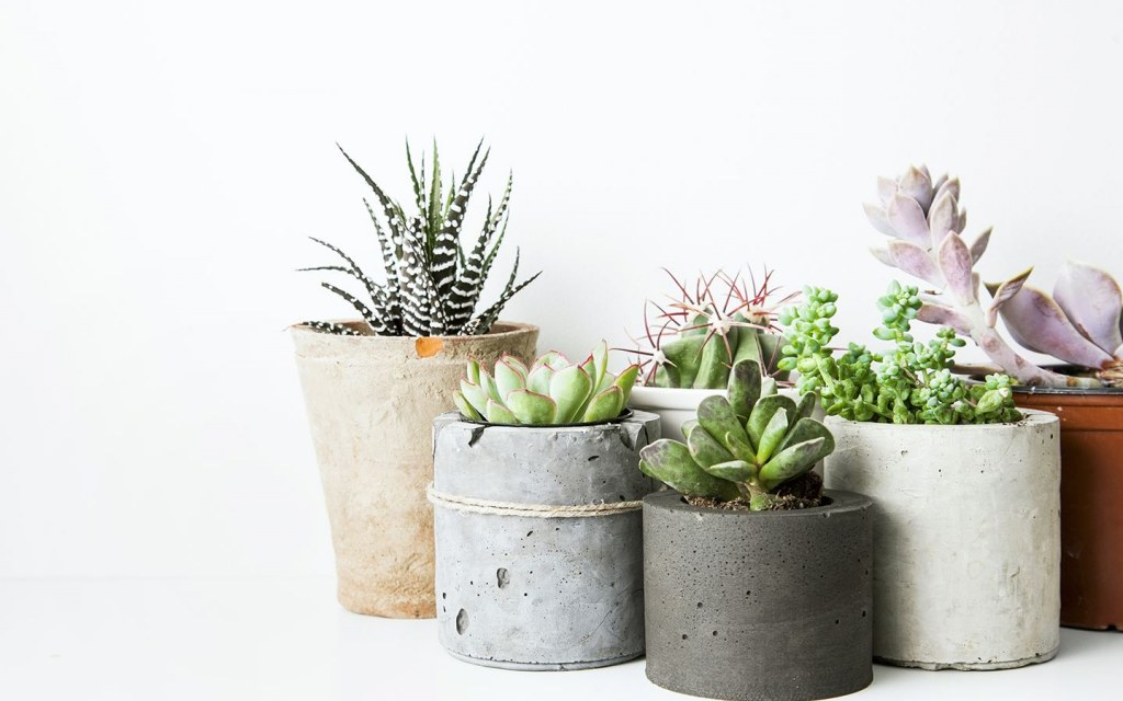 Get potted succulents for your work