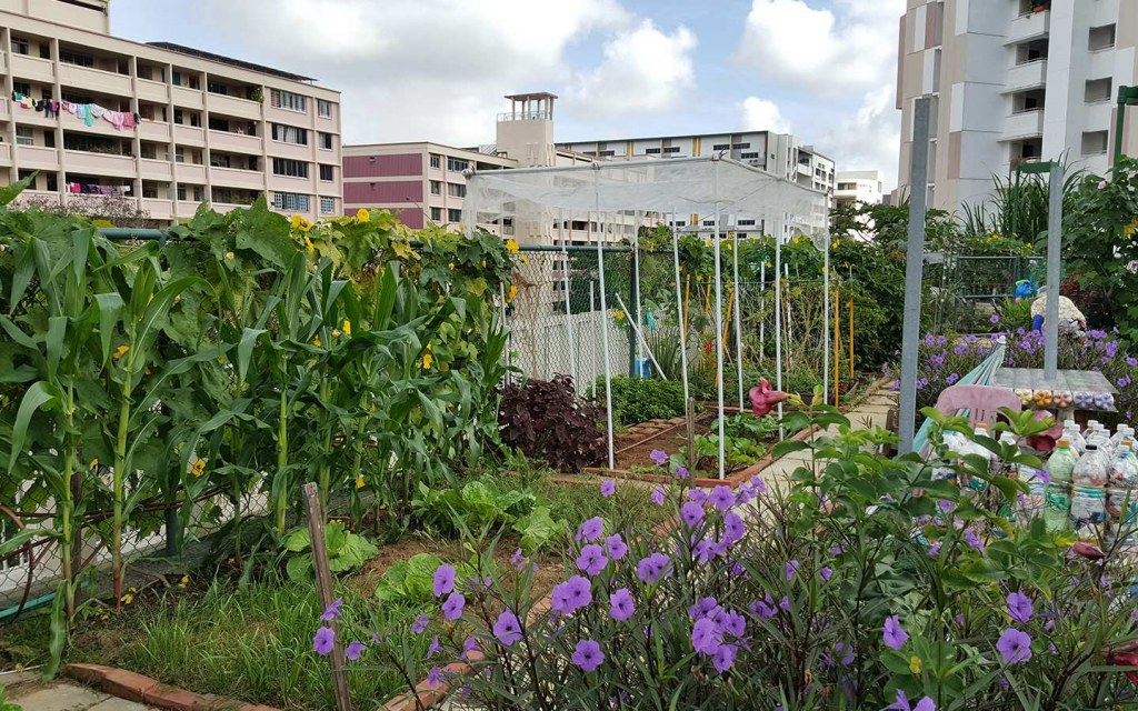 A rooftop garden is essential to fight air pollution