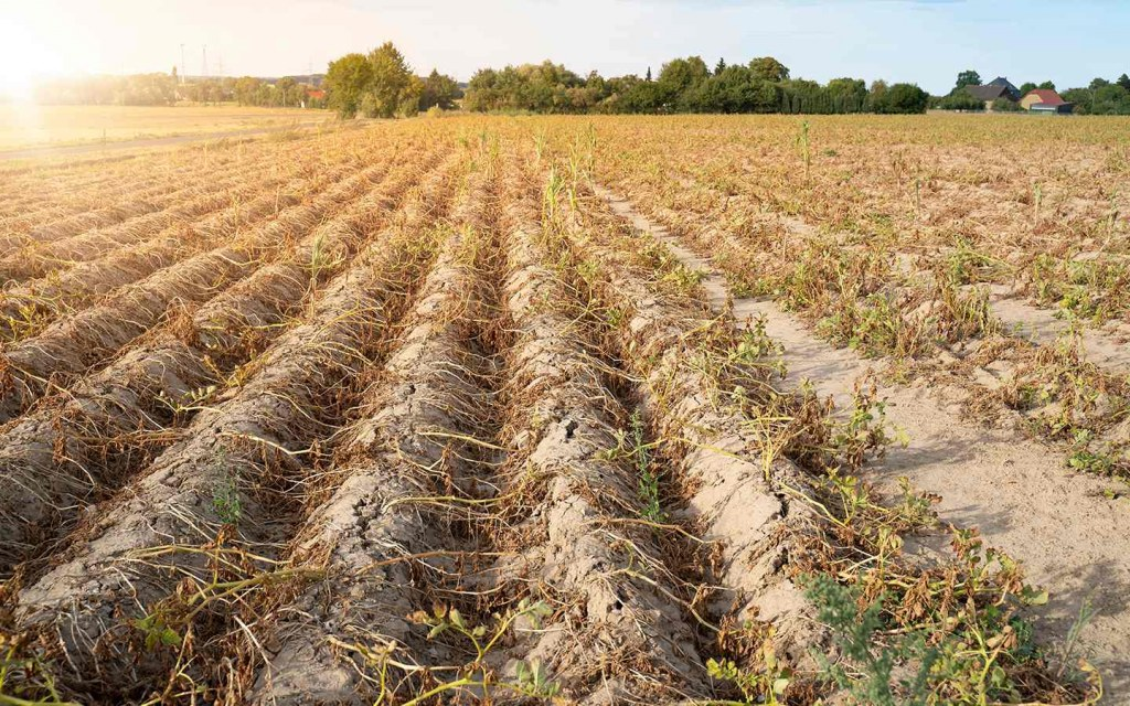 Agricultural land can become infertile due to heat