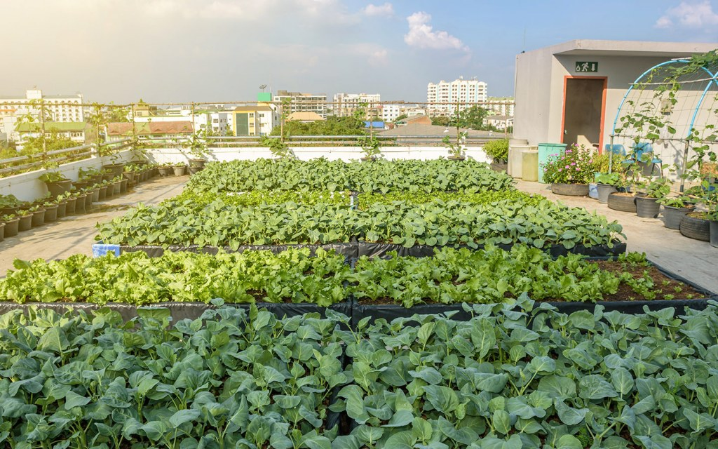 growing vegetables on roofs