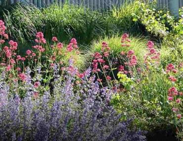 drought-resistant plants